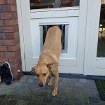 Hondenluikje